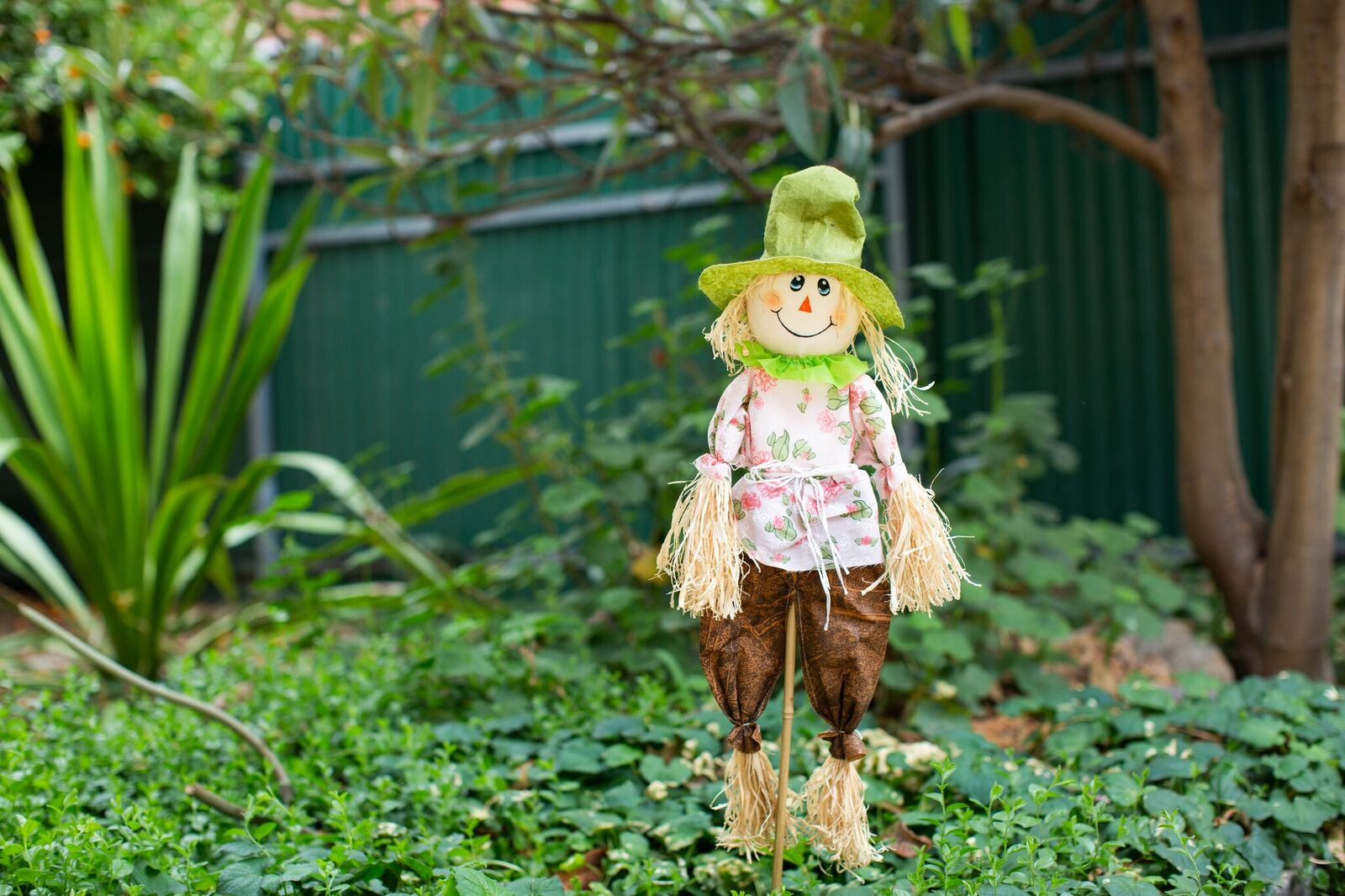 Oxford scarecrow